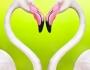 Buscar pareja… ¡yencontrarla!